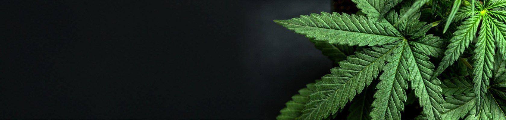 FAQ | Online Medical Marijuana Dispensary in Canada | Weed Hub Direct